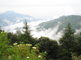Best attractions of Chail