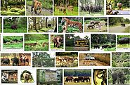 Wildlife Sanctuaries In India | Gossip Ki Galliyan