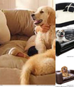 Wonderfully Cozy Dog Couches and Sofa Beds