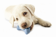 Make your own Chew toy for your Pet!