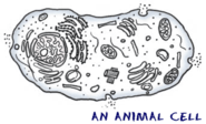 Biology4Kids.com: Cell Structure
