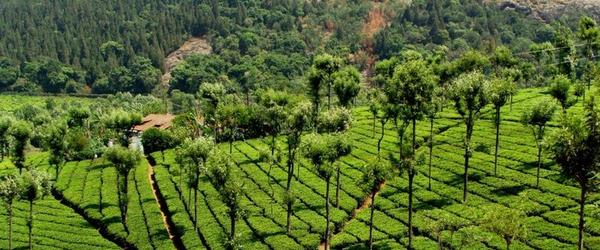 Headline for Best Places to visit in Coonoor and Ooty 2014