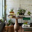 Modern Terrariums: Bringing Nature Indoors