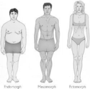 Understanding your body type is the first step towards fitness improvement