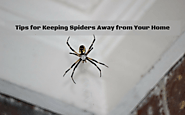 Tips for Keeping Spiders Away from Your Home