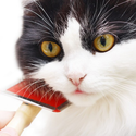 Basic Cat Grooming