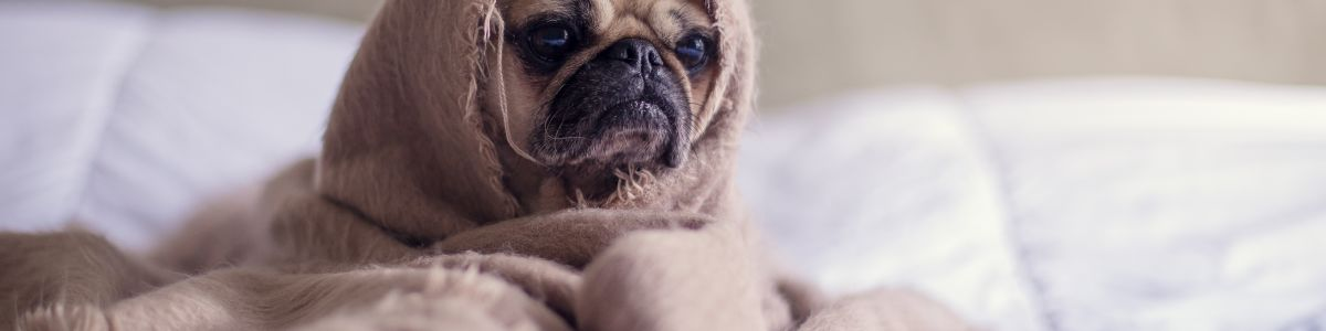 Headline for 12 MUST-KNOW things to keep your dog's sleeping area warm in winter