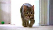 The Mean Kitty Song - YouTube