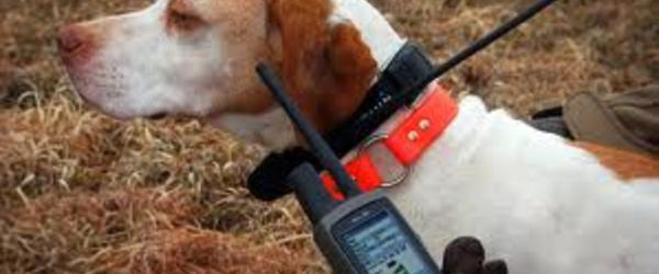 Headline for Best Electronic Hunting Dog Training Collars 2014