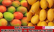 Mango season arrived with Lot of Sweet in it - Summer is Flooded with Mangoes