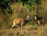 Jim Corbett Package Tour offer you Best wildlife destinations in India