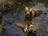 Uttaranchal Tour package make you tour more exiting with Jim Corbett Package Tour