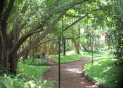 Stroll through Osho Gardens