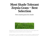 Most Shade Tolerant Zoysia Grass - Best Selection