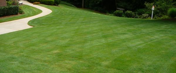 Headline for Best Zoysia for Shade - Most Shade Tolerant Zoysia Grass