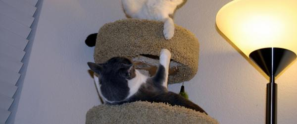 Headline for Best Cat Climbing Tower and Tree Reviews 2014