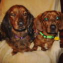 Oscar and Mayer - A Tail of Two Doxies