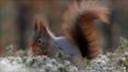 BBC - Science & Nature - Mammals - Survival zone