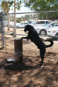 City of Carlsbad - Ann D. L'Heureux Dog Park