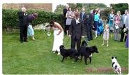 Dog Pees on Wedding Dress | Funny Animal Images- Gif-King.com