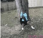 Fat Guy Tire Swing Fail | Funny People Images- Gif-King.com