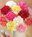 Carnation Bouquet | 12 Classic Carnations | Bunches.co.uk