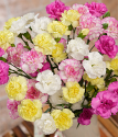 Spray Cascade | Spray Carnations Bouquet | Bunches.co.uk