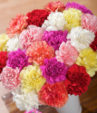 Order Carnations | 24 Classic Carnations | Bunches.co.uk