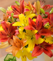 Autumn Luxury Lilies | Flowers by post with free UK delivery | Bunches the online florist