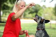 Treat Your Dog to Training Classes - Learning Tricks that Enhance Life