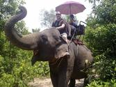 One Hour Elephant Trekking at Pattaya Elephant Village