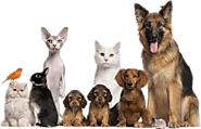 Pet Health Care Product Reviews - HappyPow