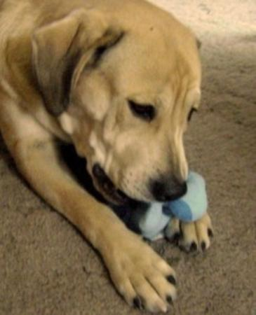 Best Affordable Plush Dog Toys For Aggressive Chewers