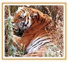 Delhi Corbett Tour Travel Package India,Delhi to corbett bus service,New Delhi to corbett ac bus ,corbett bus service...