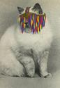 Lucy James Cat Collages