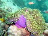 Snorkeling at Koh Ta Lu (join tour)