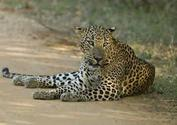 1. Yala National Park