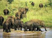 2. Udawalawe National Park