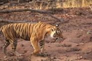 Golden Triangle tour with Ranthambore in India