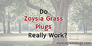 Do Zoysia Grass Plugs Really Work?