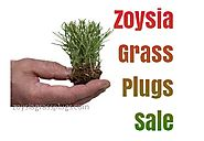 Buy 1 Get 1 Free Zoysia Grass Plugs Sale for 2017