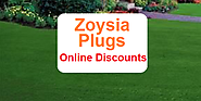 Where to Buy Zoysia Plugs - Sales and Online Discounts -