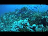 Diving St. Vincent and the Grenadines