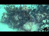 snorkeling cruise ship tour in Mahahual Mexico - YouTube