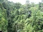 The Aerial Tram in Dominica, close to Roseau(Dominica)
