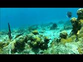 Snorkeling in St. Thomas, US Virgin Islands - buck island GoPro HD