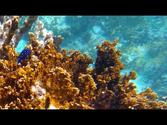 Scuba Diving in the Caribbean: GoPro HERO3 Black: Tortola & Norman Island, BVI