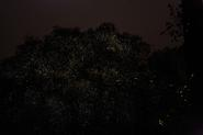 Backpack Holidays Fireflies - Trek to Rajmachi 14-15th june 2014