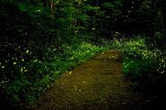 MUMBAI TRAVELLERS FIREFLIES SPECIAL TREK TO PRABALGAD 14th-15th June