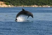 Why Are Dolphins Endangered | SEEtheWILD